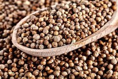 Chiuda su del cucchiaio con il Coriandrum secco dei semi di coriandolo sativum Fotografia Stock Libera da Diritti