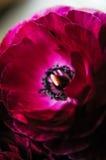 Chiuda su del fiore immagini stock