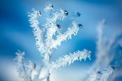 Chiuda su del fiore coperto di ghiaccio e di neve immagini stock libere da diritti