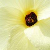 Chiuda in su del fiore giallo Immagini Stock Libere da Diritti