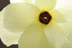 Chiuda in su del fiore giallo contro priorità bassa scura Fotografia Stock