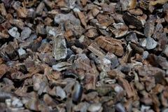 Chiuda su del fondo astratto tostato dei fagioli del cacao fotografia stock libera da diritti