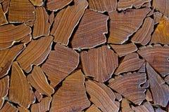 Chiuda su del fondo dei ceppi di albero Immagine Stock