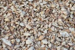 Chiuda su del giacimento crudo della manioca in rurale della Tailandia Immagine Stock
