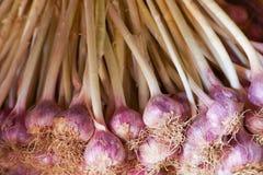 Chiuda su del gruppo di aglio porpora fresco su un marcet immagine stock libera da diritti