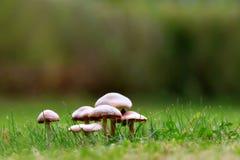 Funghi in erba Immagine Stock Libera da Diritti