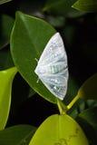 Chiuda su del lepidottero Immagine Stock