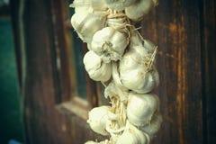 Chiuda su del mazzo di allium sativum bianco dell'aglio Tempo di raccolta asciugandosi sul fondo di legno Attaccatura da asciugar Fotografie Stock Libere da Diritti
