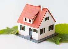 Chiuda su del modello e delle foglie verdi della casa Fotografie Stock
