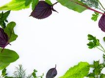 Chiuda su del mucchio delle ciliege gialle mature con i gambi Ampia raccolta delle ciliege gialle fresche Priorità bassa matura d Fotografie Stock