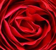 Chiuda su del petalo di rosa rossa. Immagini Stock
