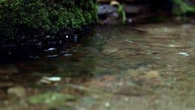 Chiuda su del ruscello balbettante Corrente della foresta che corre sotto le pietre muscose stock footage