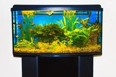 Chiuda su del serbatoio pieno dell'acquario del pesce Fotografia Stock Libera da Diritti