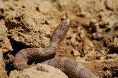 Chiuda in su del serpente immagini stock