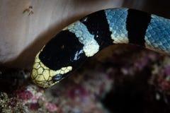 Chiuda su del serpente di mare legato fotografia stock