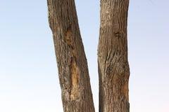 Chiuda su del tronco dell'albero sul fondo vago del cielo Immagini Stock