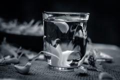 Chiuda su dell'acqua di aglio, allium sativum su una borsa dell'iuta Immagine Stock Libera da Diritti