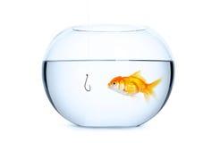 Chiuda su dell'acquario di vetro in pieno dell'acqua Fotografia Stock