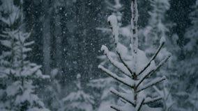 Chiuda su dell'albero con neve