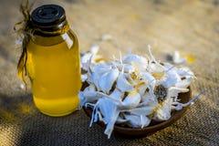 Chiuda su dell'allium sativum, aglio con il suo olio in una bottiglia trasparente Fotografia Stock