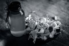 Chiuda su dell'allium sativum, aglio con il suo olio in una bottiglia trasparente Immagine Stock Libera da Diritti