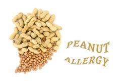 Chiuda su dell'arachide Fotografie Stock Libere da Diritti