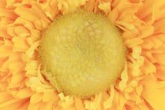 Chiuda su dell'aster giallo artificiale del fiore. Immagini Stock