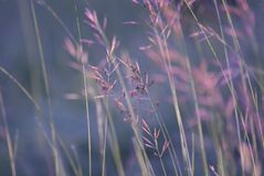Chiuda su dell'erba di dado nella mattina fotografia stock