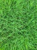Chiuda su dell'erba verde naturale della primavera fresca fotografia stock