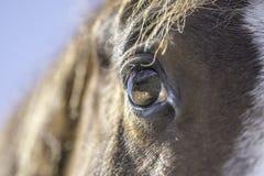 Chiuda in su dell'occhio del cavallo fotografia stock
