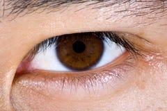 Chiuda in su dell'occhio maschio marrone Fotografia Stock Libera da Diritti