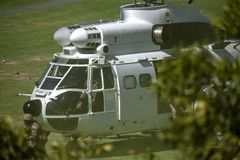 Chiuda su dell'orice sudafricano dell'atlante dell'aeronautica Fotografie Stock Libere da Diritti