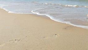 Chiuda su dell'uomo che cammina lungo la spiaggia e nel mare archivi video