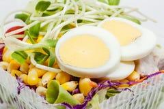 Chiuda su dell'uovo bollito del pollo con la verdura di insalata fresca immagine stock libera da diritti