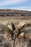Chiuda su dell'yucca nell'inverno fotografie stock libere da diritti