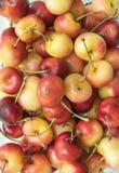Chiuda su della ciliegia più piovosa di recente selezionata fotografie stock libere da diritti