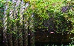 Chiuda su della corda e del muschio su una colonna di legno delle vie all' immagine stock libera da diritti