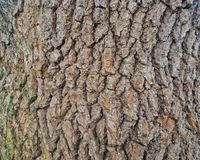 Chiuda su della corteccia di un albero in un parco Fotografie Stock