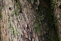 Chiuda su della corteccia e del muschio su un albero fotografia stock
