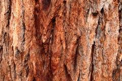 Corteccia robusta Immagini Stock