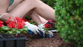 Chiuda su della donna che fa il giardinaggio a casa archivi video