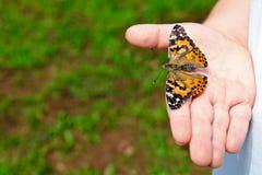Chiuda in su della farfalla della holding del bambino Fotografia Stock