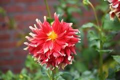 Chiuda su della flora rossa Immagini Stock Libere da Diritti