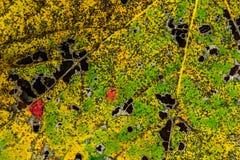 Chiuda su della foglia variopinta di autunno Immagini Stock
