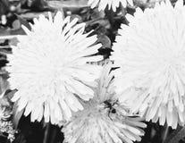 Chiuda su della formica sui fiori Immagini Stock Libere da Diritti