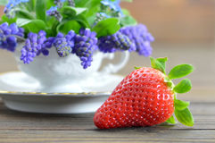 Chiuda su della fragola con i fiori della molla Fotografie Stock