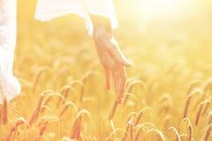 Chiuda su della mano della donna nel giacimento di cereale Fotografia Stock Libera da Diritti