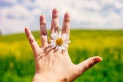 Chiuda su della mano femminile con la margherita contro il campo ed il cielo blu vivi dell'estate immagini stock