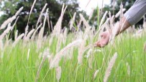 Chiuda su della mano della giovane donna quel contatto del fiore dell'erba Concetto della natura di amore stock footage