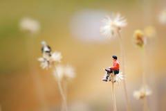Chiuda su della miniatura, conversazione di due uomini insieme sul fiore come il dente di leone Immagine Stock Libera da Diritti